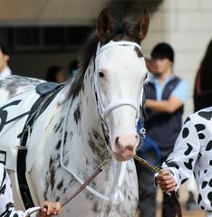 【チューリップ賞 2015】人気馬最終追い切り考察とブチコを予想