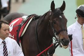 【函館スプリントステークス2015予想】有力馬最終追い切り考察