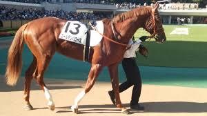 【レパードステークス2015予想】有力馬1週前追い切り考察