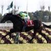 【日経新春杯2016】予想|枠順◎追い切り普通もあの馬から!
