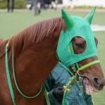 【アメリカジョッキーCC2016予想】注目有力馬と土日結果
