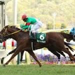 【福島牝馬ステークス2016】予想|混戦を制するのはこの穴馬!
