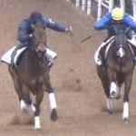 【アイビスサマーダッシュ2016】予想|追い切りからこの馬で!