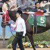 【京都牝馬ステークス2017予想】データ分析 意外と差しが決まる?前走上りに注目