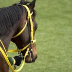 【札幌2歳ステークス2017予想】データ分析|先行馬を重視すべき!