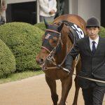【エリザベス女王杯2018予想|人気馬分析】牝馬中長距離最強はどの馬なのか?