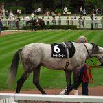 【中山記念2019】人気馬分析予想|能力・斤量から有力なのはどの馬なのか?