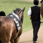 【シルクロードステークス2019】最終追い切り予想|状態良なのはどの馬なのか?