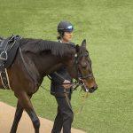 【ターコイズステークス2018予想|人気馬分析】混戦の牝馬重賞を制するのは?