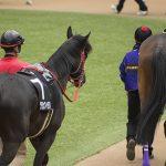 【関屋記念2019】人気馬分析予想|狙えるのはG1実績馬か?上り馬か?